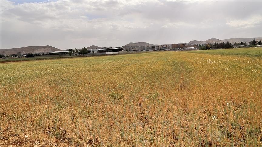 Türkiye'de 2021 su/tarım yılı 7 aylık yağışları yüzde 24 azaldı