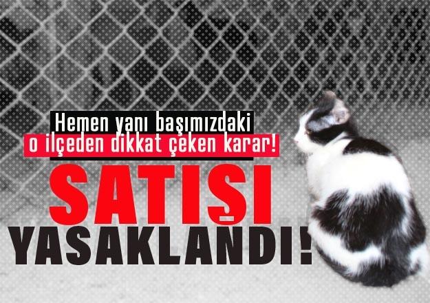 İkizdere'de evcil hayvan satışı yasaklandı