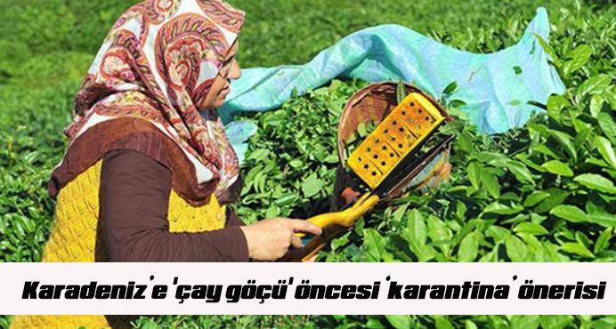 Karadeniz'e 'çay göçü' öncesi 'karantina' önerisi