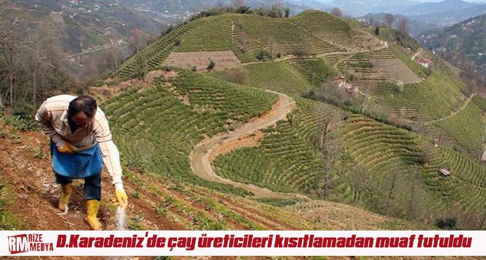 Doğu Karadeniz'de çay üreticileri kısıtlamadan muaf tutuldu