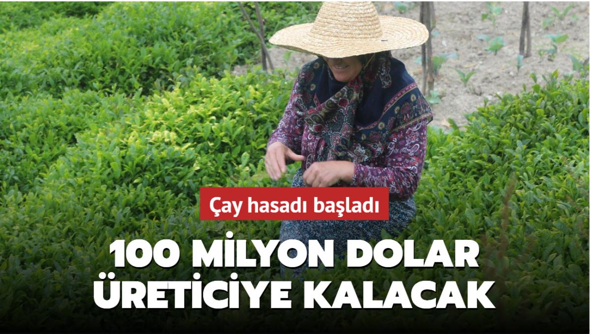 Çay ailece toplanacak, 100 milyon dolar üreticiye kalacak