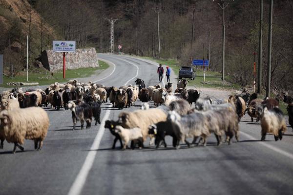 Çobanlara yaylalarda barınma ve güneş enerjisi sistemi desteği