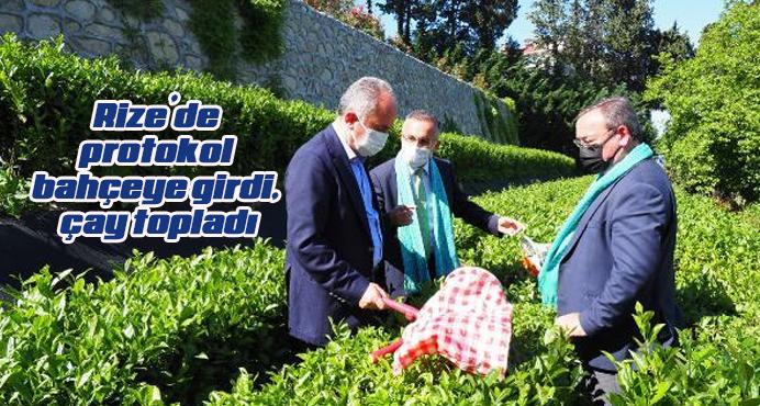 Rize'de protokol bahçeye girdi, çay topladı