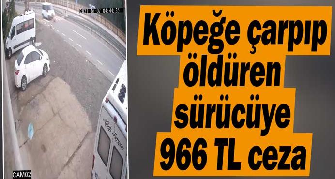 Köpeğe minibüsle çarpıp ölümüne neden olan sürücüye 966 TL ceza