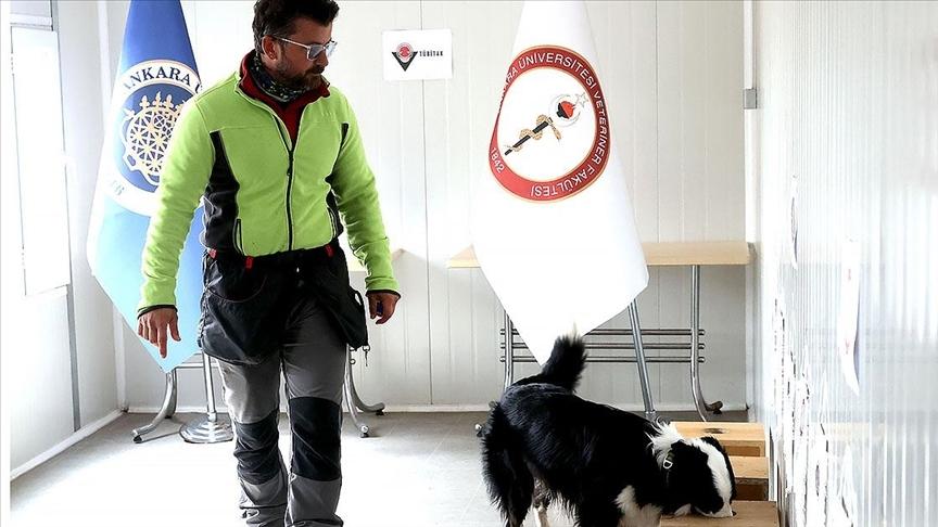 Özel eğitimli köpek 'Zippo' Kovid-19 virüsünü kokudan tespit ediyor
