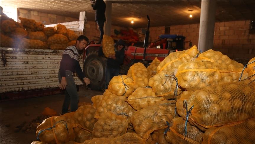 Depoda kalan patates, TMO tarafından üreticiden alınıp ihtiyaç sahiplerinin sofrasına ulaştırılıyor