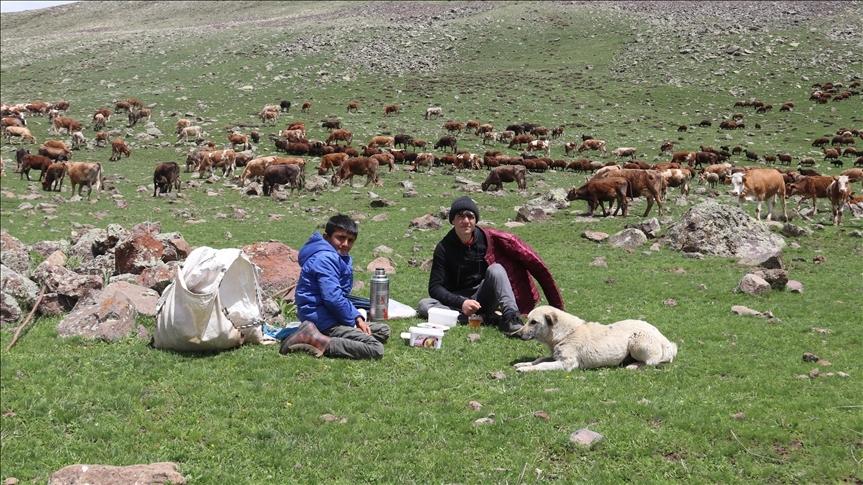 Doğu Anadolu'da küçükbaş hayvanların yayla yolculuğu başladı