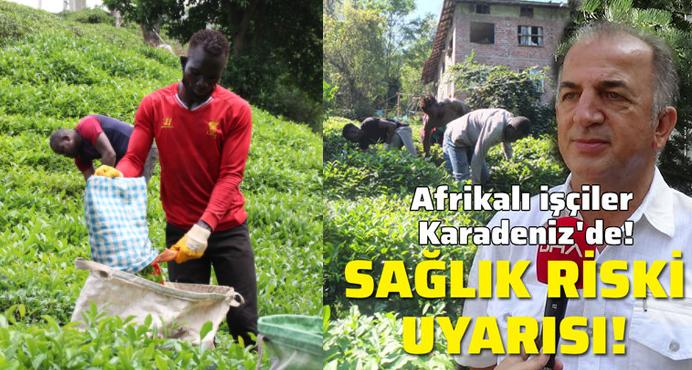 Afrikalı işçiler çay tarımı için Karadeniz'de; uzmandan 'sağlık riski' uyarısı